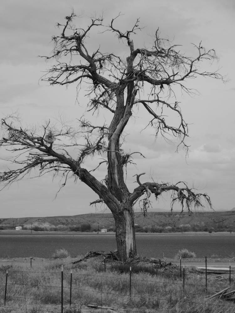 An old tree, New Mexico, USA © 2018 ericarobbin.com | All rights reserved.