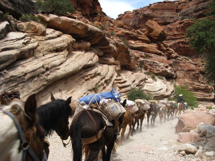 Mail-by-mule train, Havasupai Falls, Grand Canyon, Arizona, USA © 2018 ericarobbin.com | All rights reserved.