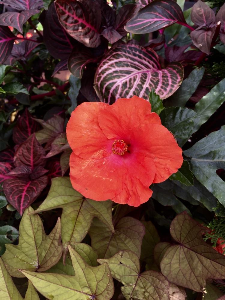 An orange flower, Boston, Massachusetts © 2018 ericarobbin.com | All rights reserved.